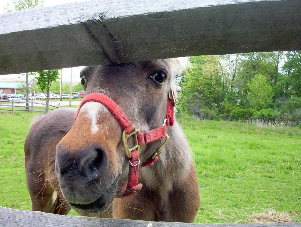 brown horse peeking through fence