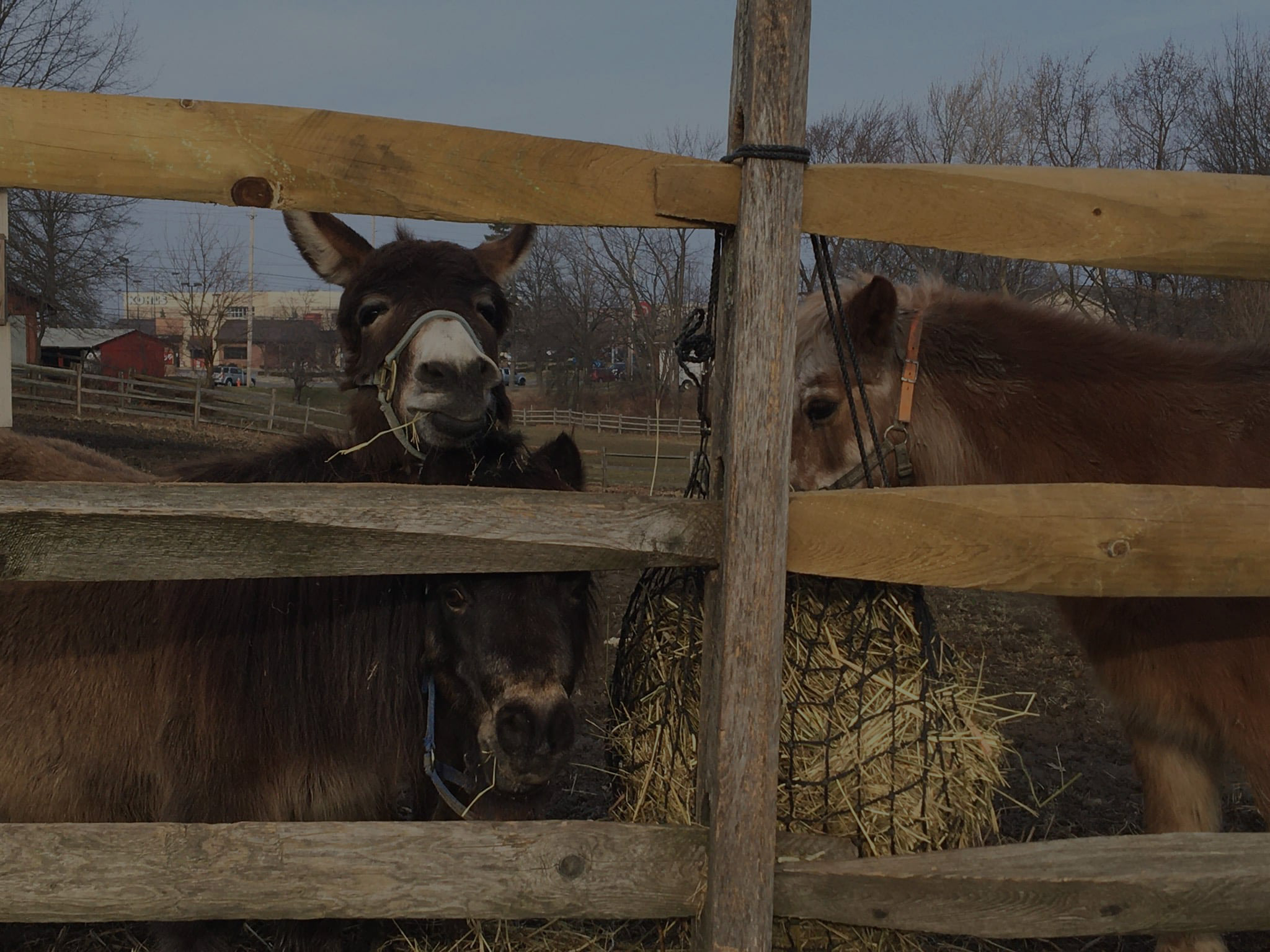 a donkey and two ponies by a fence