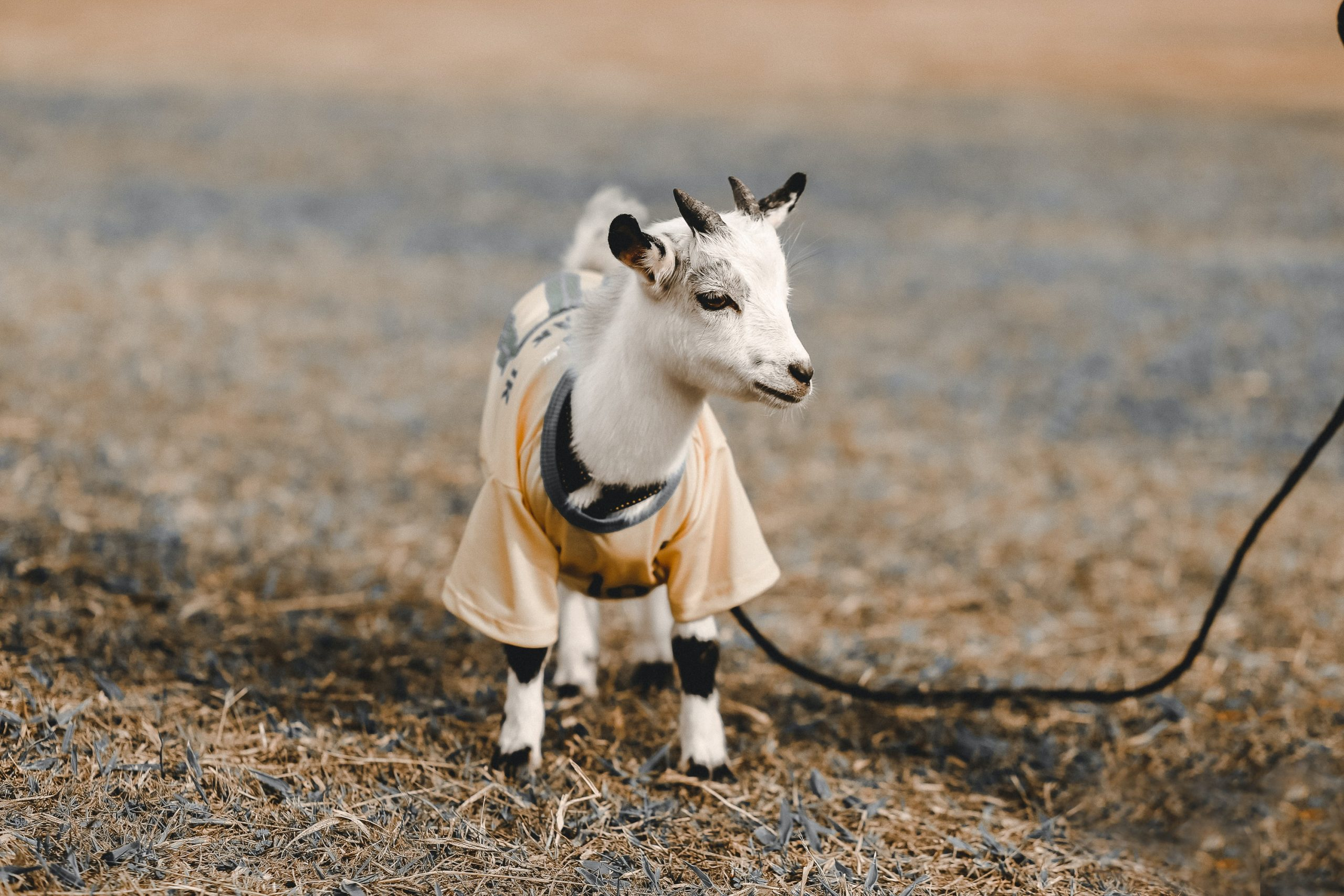 Goat Rising for Beginners